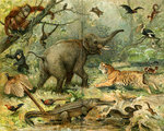 Various wild animals South East Asia.