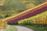 Vineyards with grapes in autumn landscape