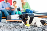 family dog \u200b\u200bplaying in the living room with ball