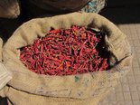 chilli,chilli peppers,spicy,hot,red,vegetables,vegetable,plant,plant vegetables,food,nahrunsmittel,food,nutrition,health