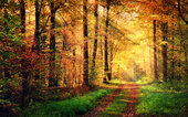 autumn forest scenery with rays of warmlight