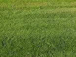 Green grass meadow background