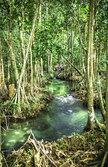 Greenery nature  forest of Krabi, Thailand