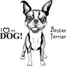 vector sketch dog Boston Terrier breed smiling