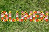 flower garden spring grass meadow lawn nature