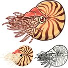 High Quality Nautilus Cartoon Character Include Flat Design and Line Art Version Vector Illustration