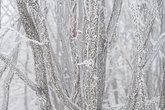 winter landscape with trees and branches covered with hoarfrost