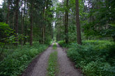 straight gravel road without vehicles through a forest in spring at the day