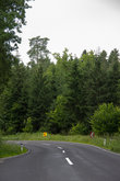 dry asphalted road with curve without vehicles through a forest in spring at day