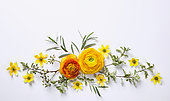 Yellow ranunculus on white background