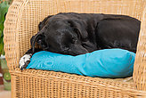 Dog sleeps at the rattan chair - close-up