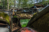 Old cars with moss on a place